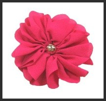 Shocking Pink Bachelor Button